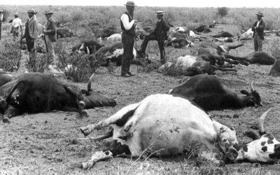 OIE: La importancia de las vacunas 10 años después de erradicar la peste bovina